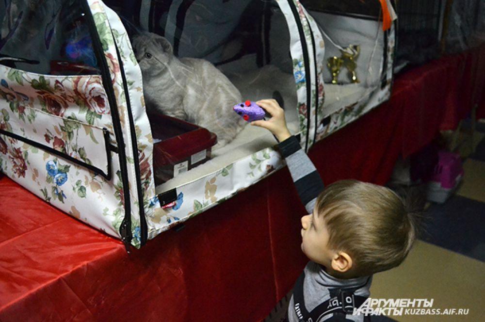 На выставке можно было играть с котятами.