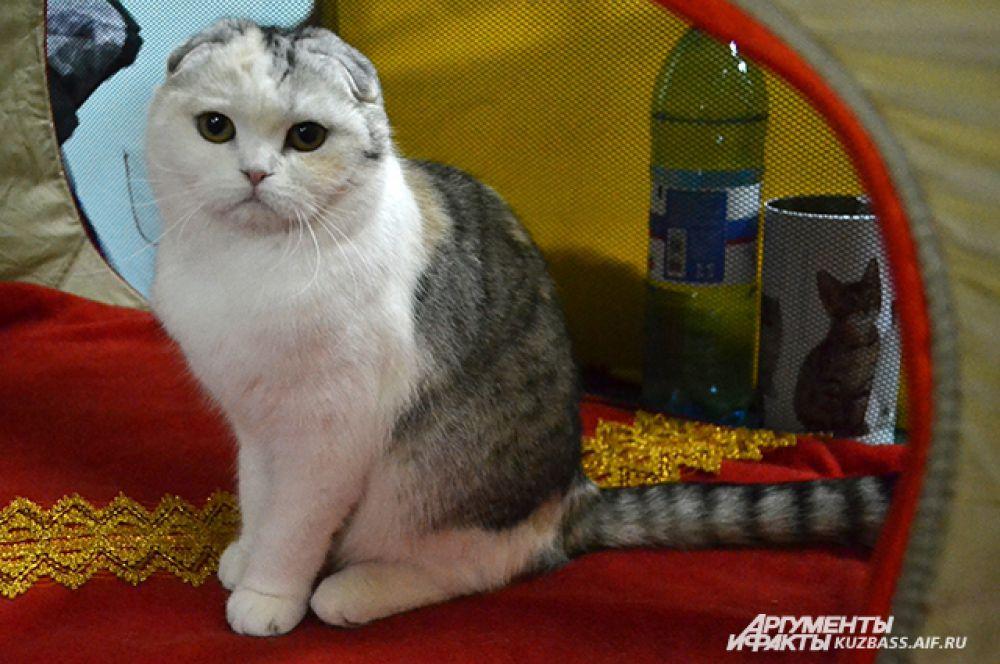 Нет! Кошка вас не гипнотизирует! Но оторваться невозможно.