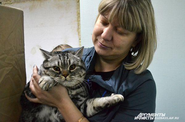 Тех, кто любит, чтобы хорошего котика было много, очарует короткошёрстный британец.