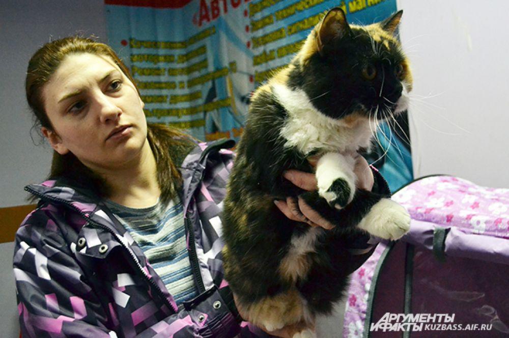 Зато на выставке нередко можно найти и породистую кошку, которую отдадут в хорошие руки даром. Дело в том, что своему хозяину она прибыли уже не принесёт, т.к. перестала приносить котят, а в доме и друге очень нуждается.
