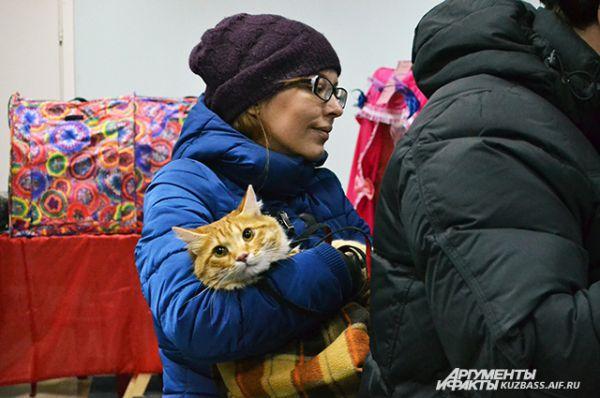 На выставку коты и кошки прибывали кто в чём. Некоторые и так: на руках у хозяйки, укутанные в тёплый мягкий плед.