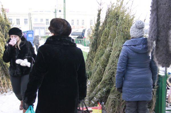 За некоторые деревья придется отдать 1500 рублей.