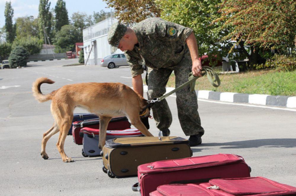 Служебные собаки обучены поиску наркотических средств, взрывчатых веществ, оружия и боеприпасов.
