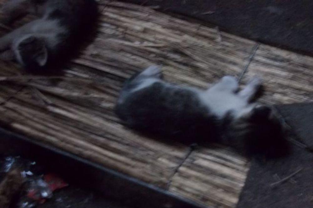 Котики на блок-посту ополченцев.