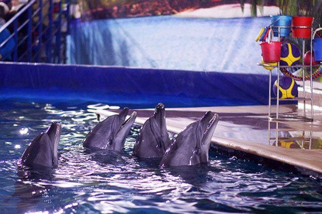 Передвижной дельфинарий в Иркутске.