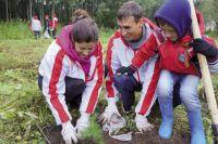 """Во время акции """"Зеленая Россия"""" нефтепереработчики посадили 60 сосенок в Черняевском лесу."""