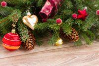 Как правильно утилизовать ёлку: вторая жизнь после праздников, Вопрос-ответ, Новый год, Аргументы и Факты