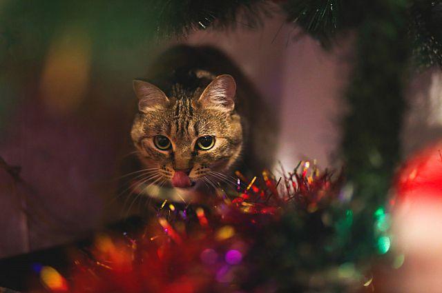 С новым годом поздравляет домашний кот. Это не Матроска.
