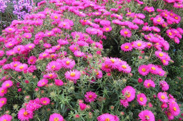«Морозные цветы» Воейкова – самые обычные октябринки