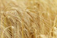 В Омской области увеличатся объемы сельскохозяйственной продукции в 2015 году.