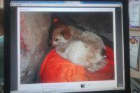 Замерзающего щенка спас омский пес по кличке Капа.