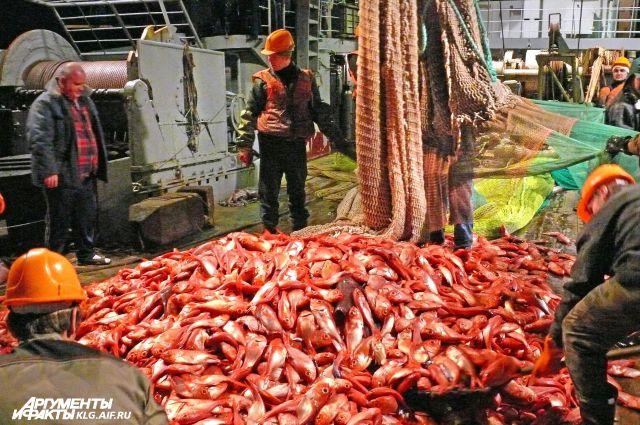 Увидим ли мы рыбу на прилавках, зависит от законотворцев.