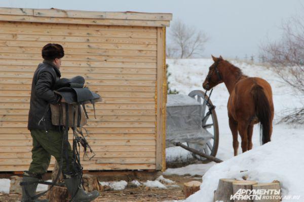 Жеребца по имени Гвоздик готовят к пробежке по снежной степи.