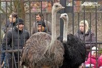 Калининградский зоопарк готовит в 2015 году массу сюрпризов для посетителей.