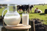 Молоко - источник здоровья и красоты.