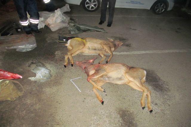 Незаконная охота в Чугуевке