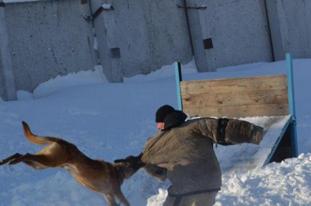 Омские студенты увидели работу служебных собак.