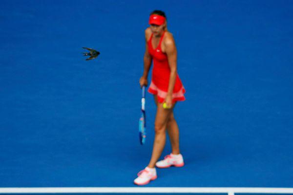 Четвертьфинал дался Марии довольно легко, она даже могла позволить себе полюбоваться на пролетающих птичек. Шарапова в матче Australian Open против канадки Эжени Бушар.