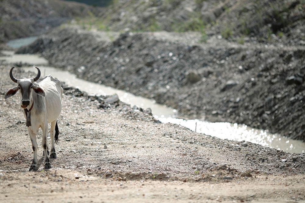 Больше всего от засухи пострадает сельское хозяйство, что усугубит непростую ситуацию в бразильской экономике. Засуха также повлияет на энергетику - в связи с сокращением производства энергии на гидроэлектростанциях.