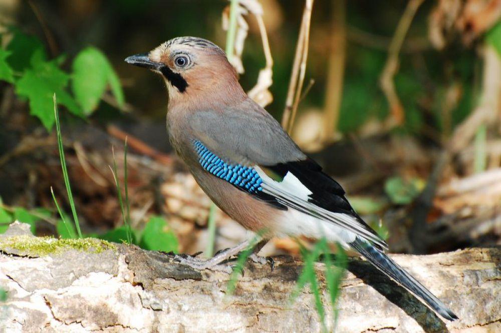 птицы поволжья картинки самые