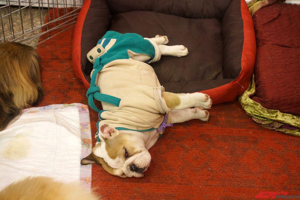 Некоторые собаки спали, не обращая внимание на посетителей.