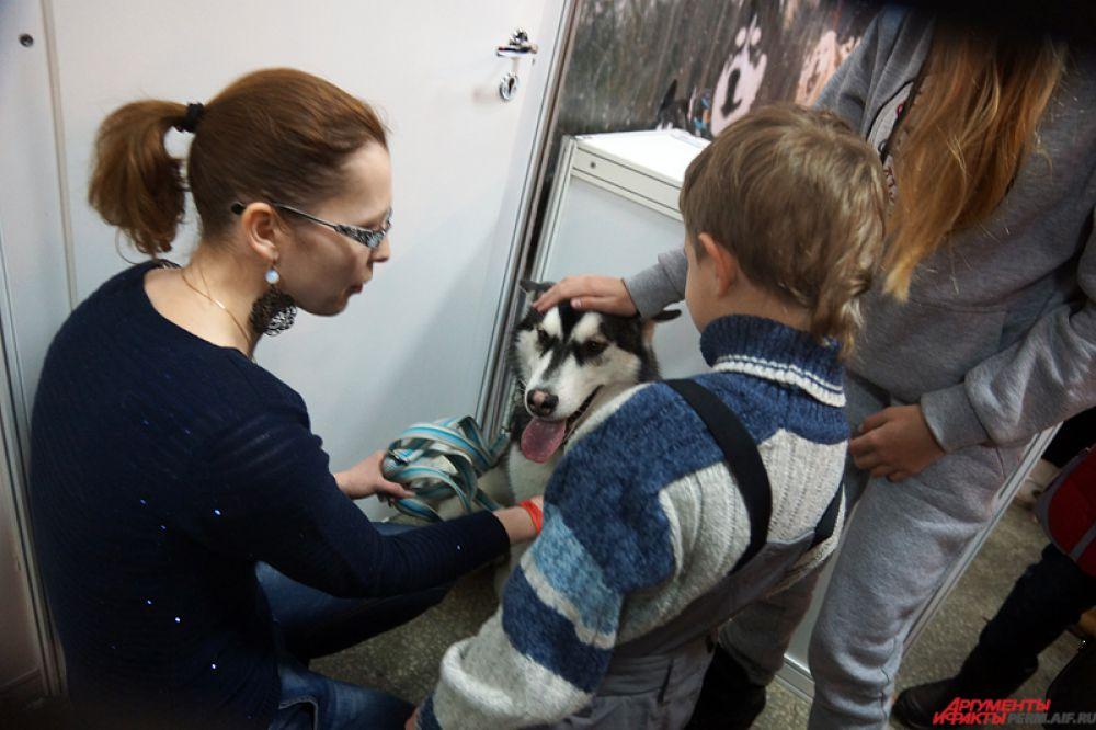 Сибирские хаски пользовались большой популярностью у маленьких гостей экспозиции.