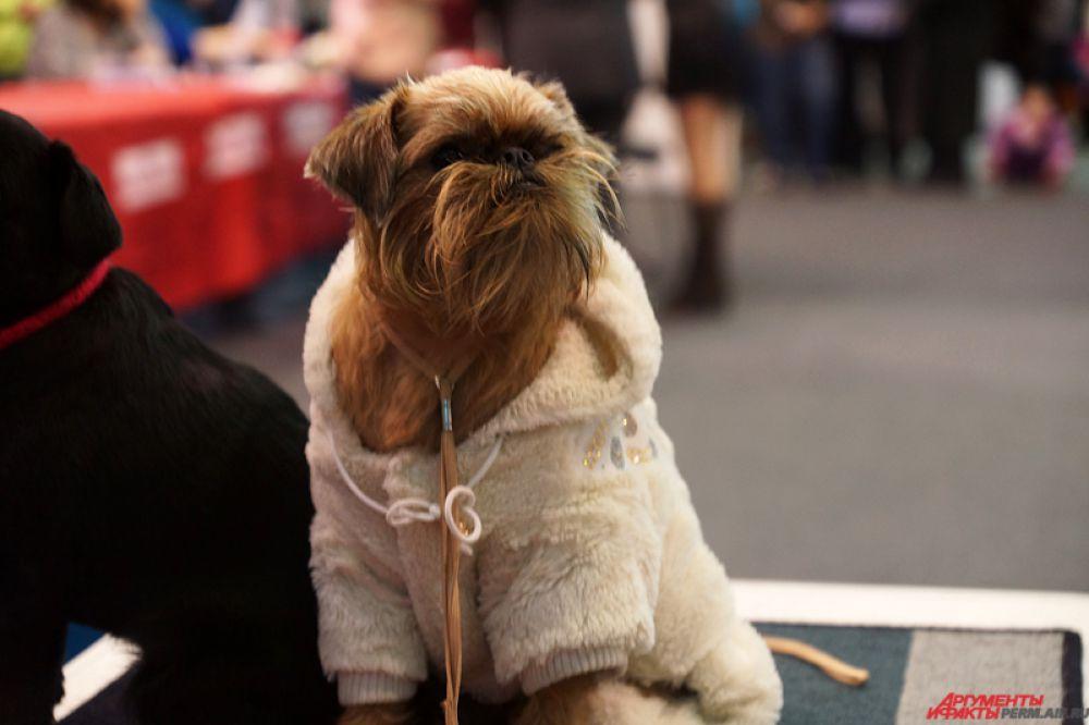 Часто собаки были одеты в разнообразные кофточки и свитера.