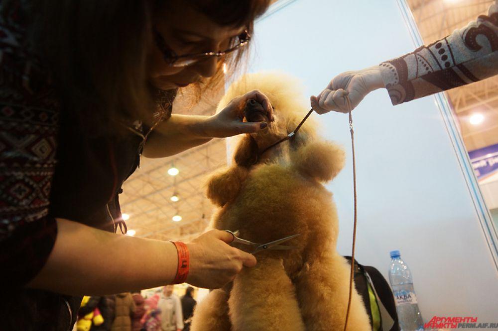 Также на экспозиции работают собачьи парикмахеры, на глазах у зрителей создающие четвероногим друзьям уникальные стрижки.