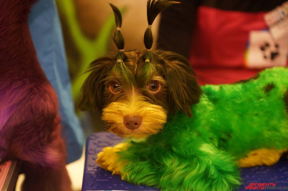 С 31 января по 1 февраля на «Пермской ярмарке» проходит Международная выставка собак.