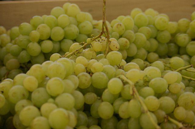 Не каждая гроздь винограда может попасть на стол россиян.