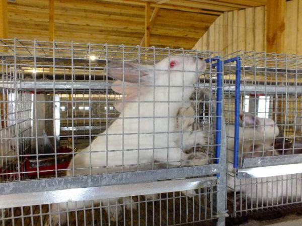 Кролик любопытен как кошка - суёт свой нос во всё неизведанное.