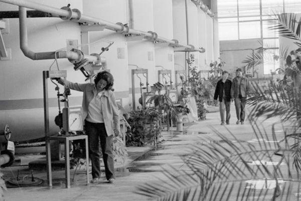 Процедура охлаждения реактора на Чернобыльской атомной электростанции.