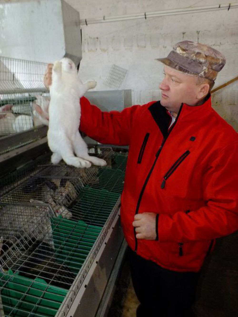 Кроликов держат именно так, а не за уши, как думают некоторые.