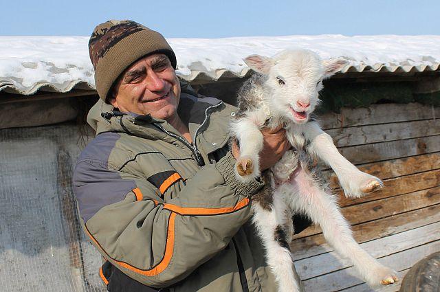 Юный символ Года овцы дарит надежду на лучшее.