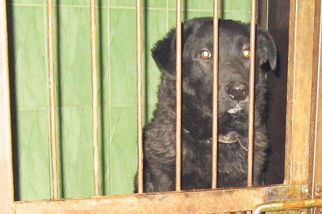 Как в Омске обращаются с бездомными собаками?