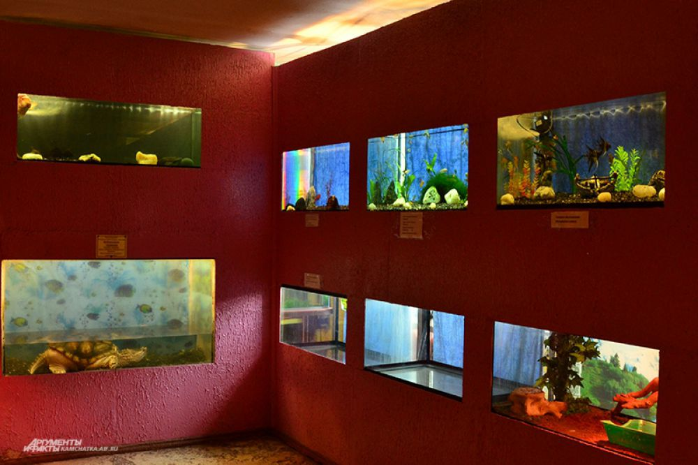 В аквариумном зале скоро появятся новые красивые рыбки.