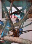 Попугаи - одни из первых птиц, населявших зоопарк в 1980-е годы.