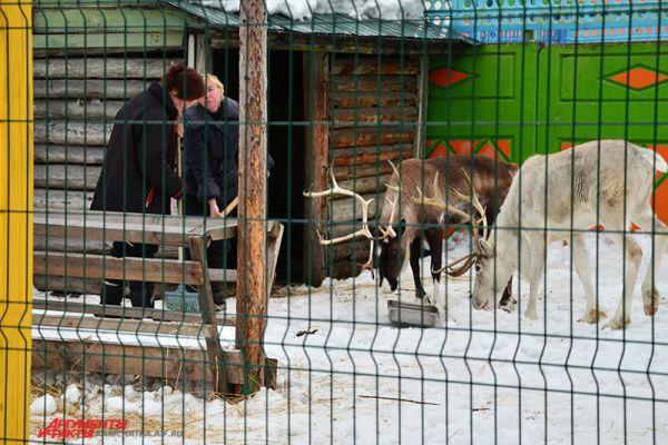 Работники зоопарка следят за чистотой в вольерах.