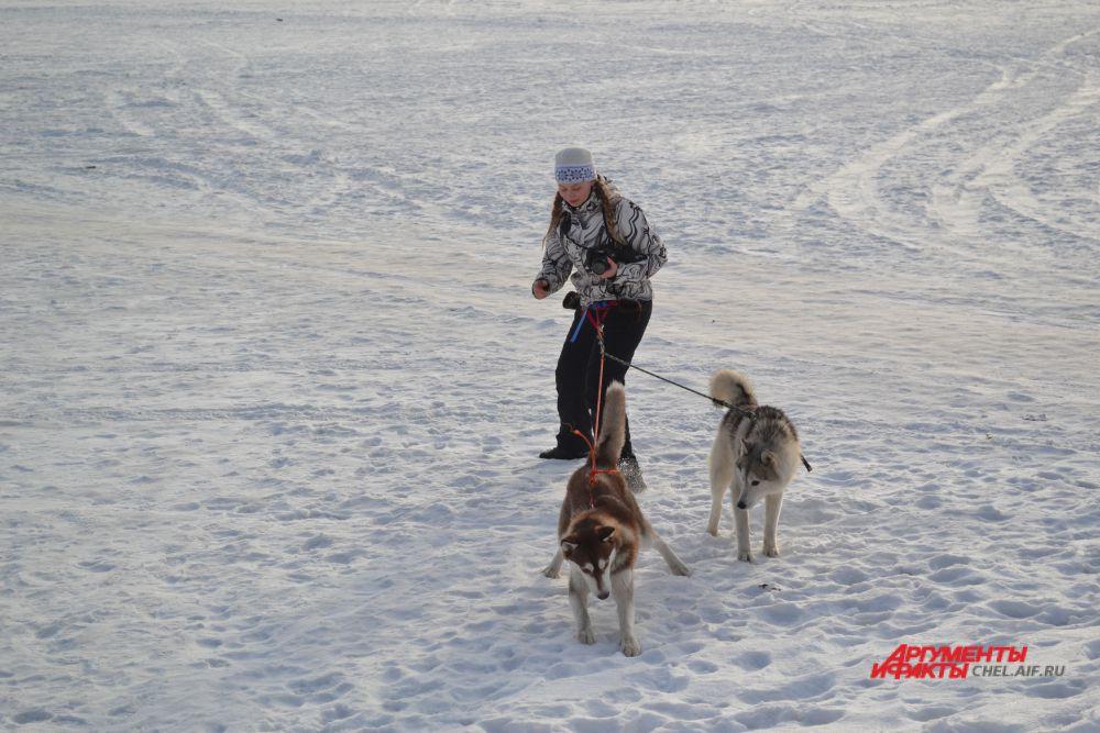 Опытные собаководы приходят на тренировку сразу с двумя питомцами.
