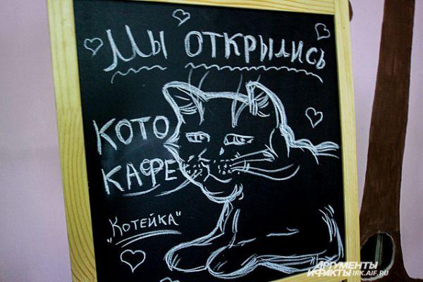 За первый час общения с кошками и себе подобными с вас возьмут 220 рублей. За каждую последующую минут – 1 рубль.