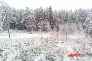 В Архангельской области восстановили леса больше, чем планировалось
