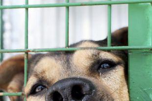 Шарику - паспорт. Приют для бездомных собак в Поморье оштрафован на 200 тыс