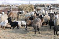 В Приморье фермеры выращивают различных животных.