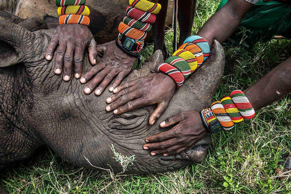 Ами Витале, фотограф, работающий для National Geographic, занял второе место в категории «Природа». На данной картине изображена группа молодых воинов племени Самбуру, которые впервые в своей жизни столкнулись с носорогом.