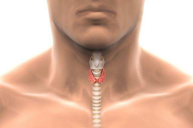 Заболевания щитовидной железы и спорт — SportWiki энциклопедия
