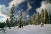 Перепись лесных животных завершится в середине марта.