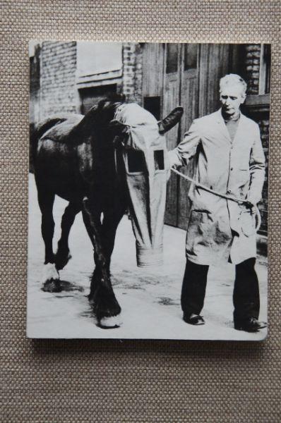 Редкое фото, на котором запечатлена лошадь в противогазе.