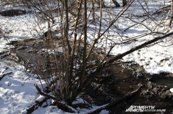 В этом незамерзающем роднике четвероногие животные моются, а потом чешутся о дерево-чесун.