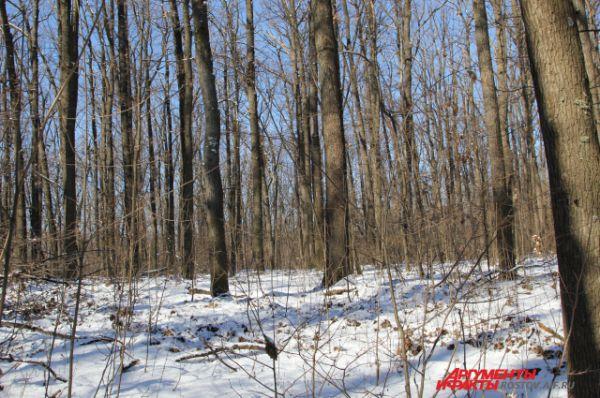 Дубы сажали ещё наши прадеды. История этого лесного оазиса в донской степи ведёт отсчёт с 1878 года.