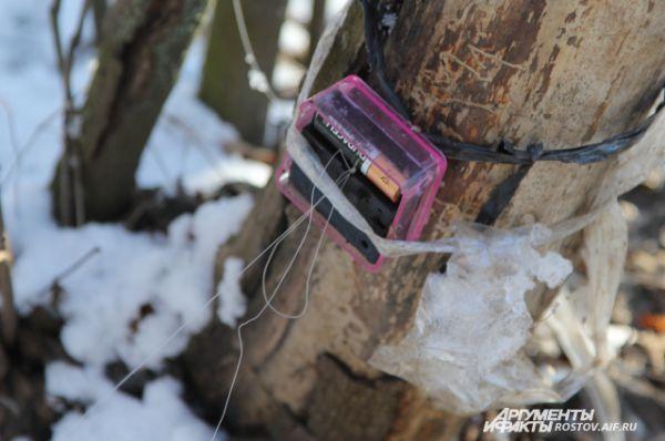 Кабан или олень цепляют леску, батарейка из часов выскакивает и таким образом часы останавливаются и показывают время прихода животных на поляну.